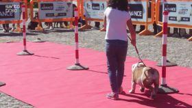 desfile-canino-assinala-requalificacao-da-clinica-veterinaria-de-santo-tirso